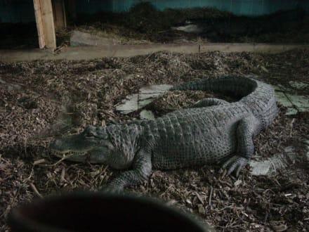 Na seht ihr beide Alligatoren? - Alligator Action Farm