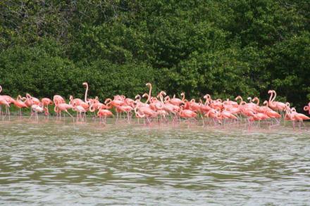 Flamingos - Flamingos von Celestun