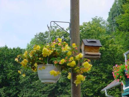 Blumen in der Bamschabl - Buschenschank Baumschabl