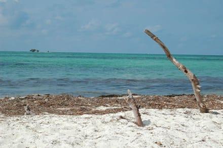Ausblick aufs Meer - Bahia Honda Key State Park