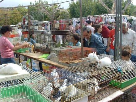 Markttag - Markt Santa Maria