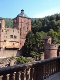 Burg/Palast/Schloss/Ruine - Schloss Heidelberg