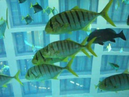 Fische im Aqua Dom - Sea Life Center & Aquadome