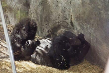Safari muss man machen - Animal Kingdom