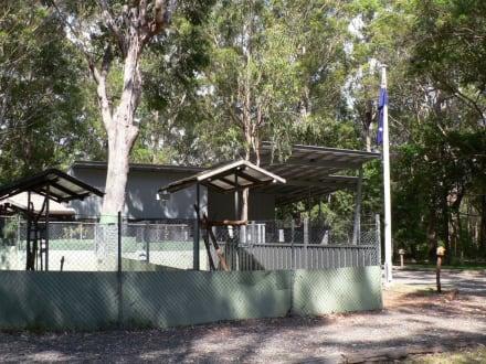 Koala-Hospital in Port Macquarie - Koala Hospital