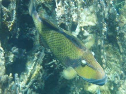 Ein toller Blick am Hausriff - Schnorcheln Coraya Bay Marsa Alam