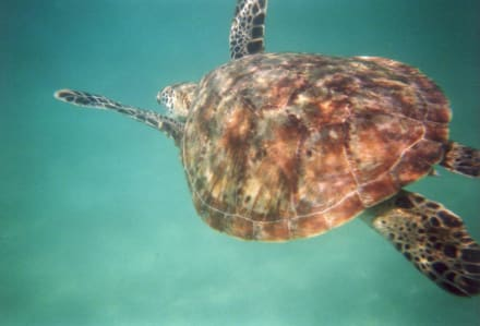 Ningaloo Reef Marine Park - Ningaloo Reef Marine Park