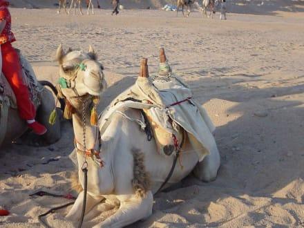 Quad Ausflug - Quad Tour Hurghada