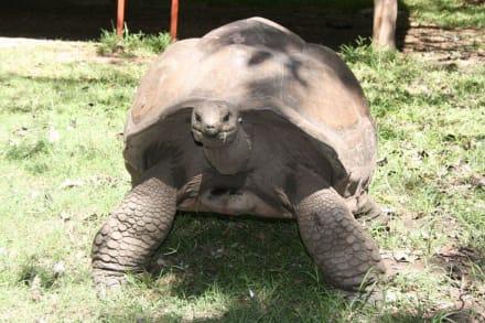 Maxi Schildkröte 3 - Haller Park