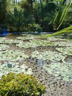 Seerosenteich mit quakenden Fröschen - Garten Majorelle