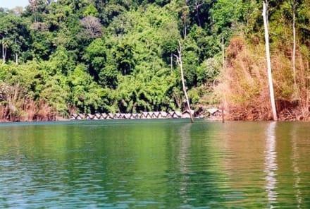 Khao Sok - Cheow Lan Lake Expedition