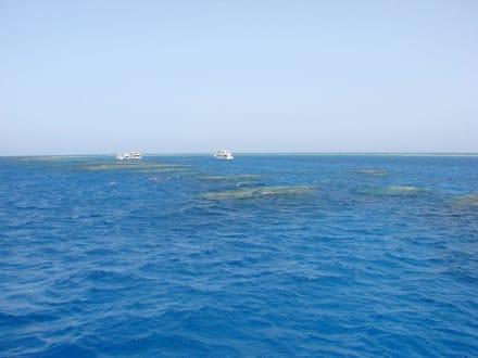Das Riff - Schnorcheln Dolphinhouse Marsa Alam