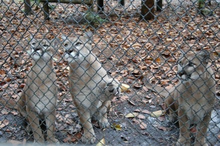 Meet the Keeper - Naples Zoo