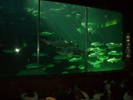 Hai Anlage - Two Oceans Aquarium