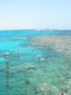 Korallenriff - Giftun / Mahmya Inseln