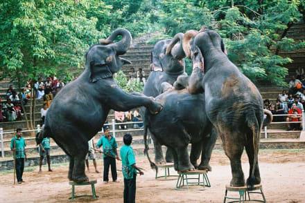 Elefantenshow - Colombo Zoo