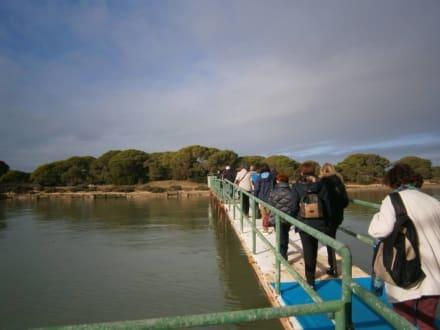 Steg - Nationalpark Coto de Doñana