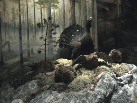 Reichsmuseum - Naturhistorisches Reichsmuseum