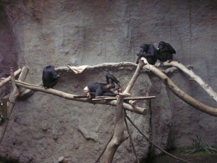 Im Pongoland - Zoo Leipzig