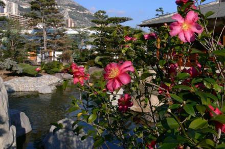 Blütenpracht - Japanischer Garten