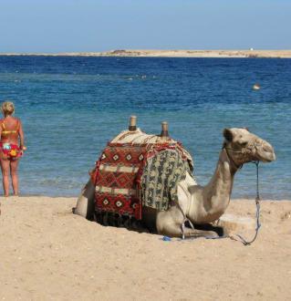 """Blick zum Meer mit """"Hauskamel"""" - Ausflug mit Mohamed"""