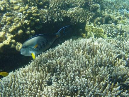 Schnorcheln im Roten Meer - Schnorcheln Hurghada