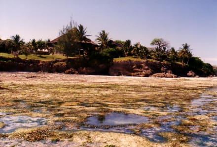 Ebbe - Tauchen & Schnorcheln Diani Beach