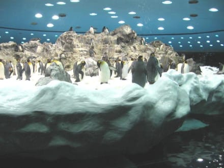 Pinguinstation - Loro Parque