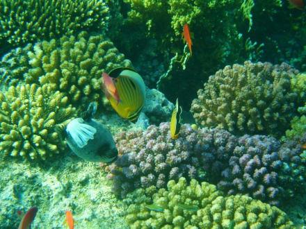 Unterwasserwelt - Tauchen Makadi Bay