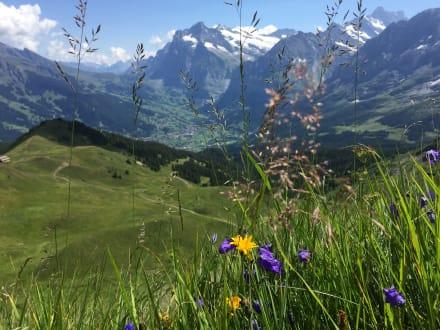 Traumhafte Wanderwege - Wandern Grindelwald