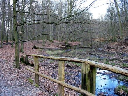 Naturpark Wildwald bei Arnsberg - Wildwald Vosswinkel