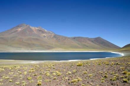 Laguna und Vulcano Miniques - Laguna Miscanti