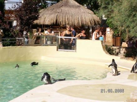 Pinguine - Marineland