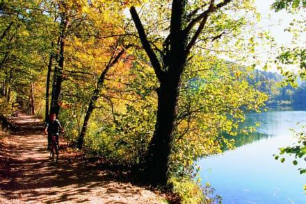 Ufer des Montiggler Sees - Montiggler See