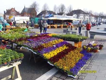Blumen für den Garten! - Heider Marktplatz