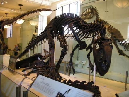 Museum of Natural Science New York - Museum of Natural History