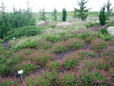 Thema Heidelandschaft - Lausitzer Findlingspark Nochten