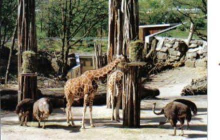 Zoo Osnabrück - Zoo Osnabrück