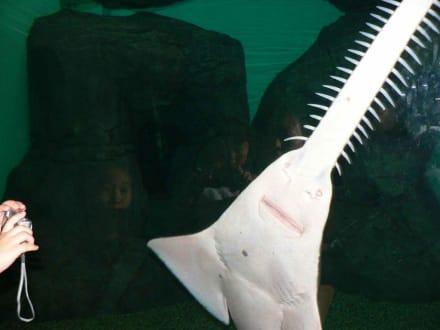 noch ein Fisch  - Shanghai Ocean Aquarium