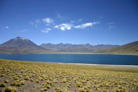 Laguna Miscanti - Laguna Miscanti