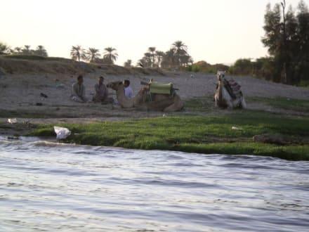 Blick vom Nil - Nil