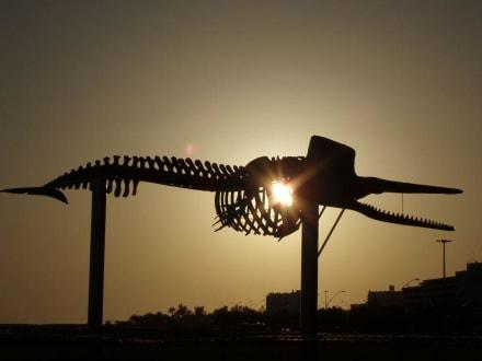 Wahl-Skelett am Strand - Strand Jandia
