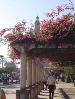 Eine blühende Promenade im Januar - Shoppingcenter Boulevard El Faro