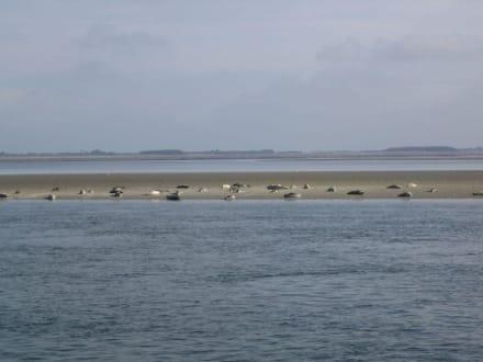 Seehundsbänke vor Amrum - Wattenmeer