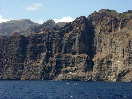 Los Gigantes Felsen und Möwen - Steilküste Los Gigantes