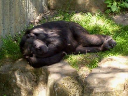 """Gute Nacht"" - Erlebnis-Zoo Hannover"