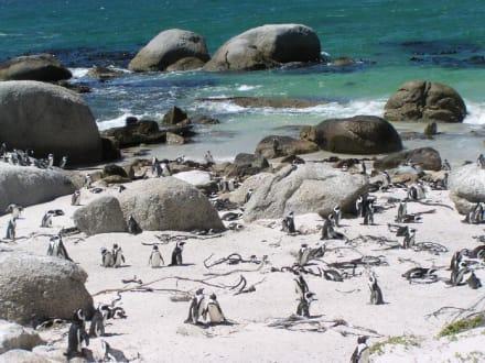 Pinguine am Boulders Beach - Boulders Beach