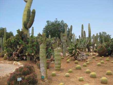 Botanicactus - Botanischer Garten Botanicactus Ses Salines