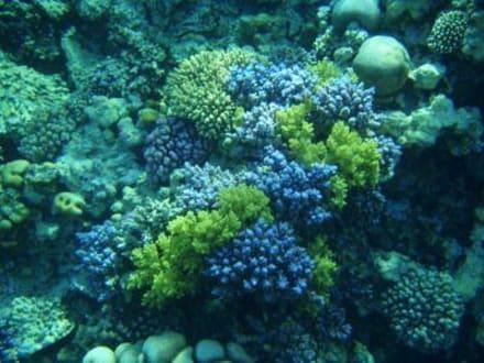 Korallen - Tauchen Makadi Bay