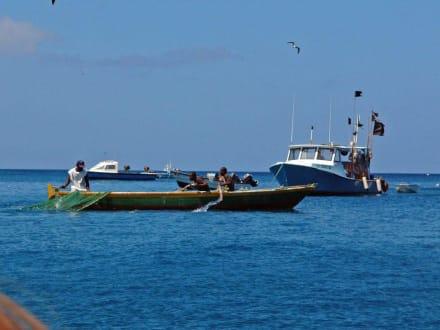 Grenada - Fischer - Fischereihafen St. Georges
